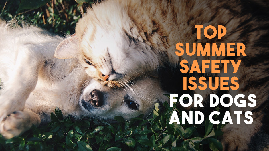 The Top Summer Safety Issues for Dogs and Cats